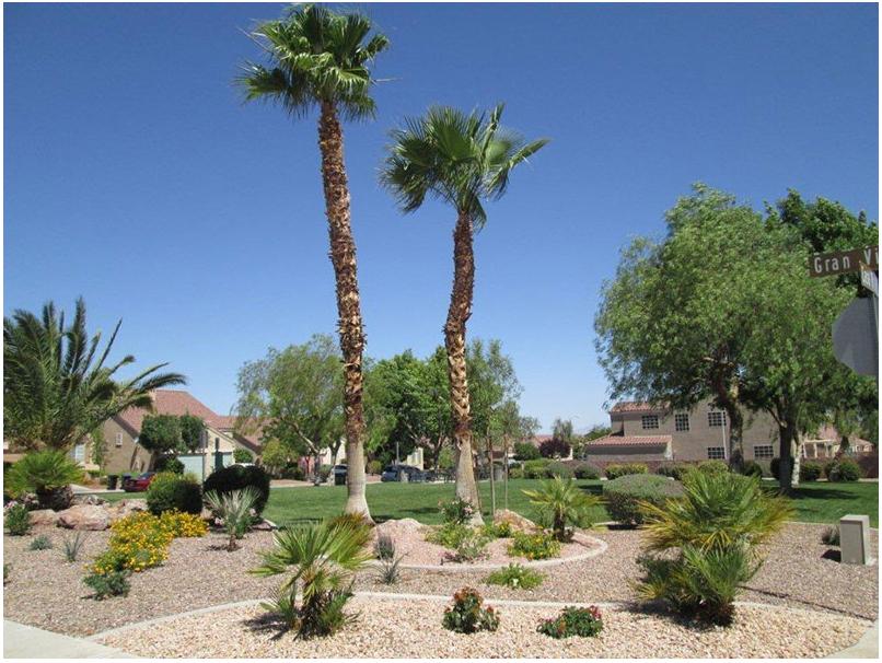 Desert Landscaping Design in Las Vegas
