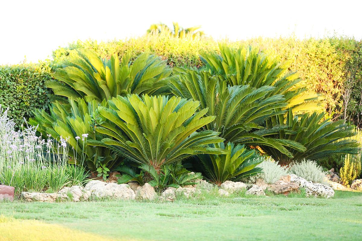 Las Vegas Tree Care